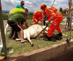 Animal foi encontrado vivo dentro de uma cova no cemitério Santa Clara, em Alfenas