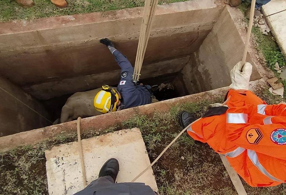 Bovino é resgatado em cova em Alfenas